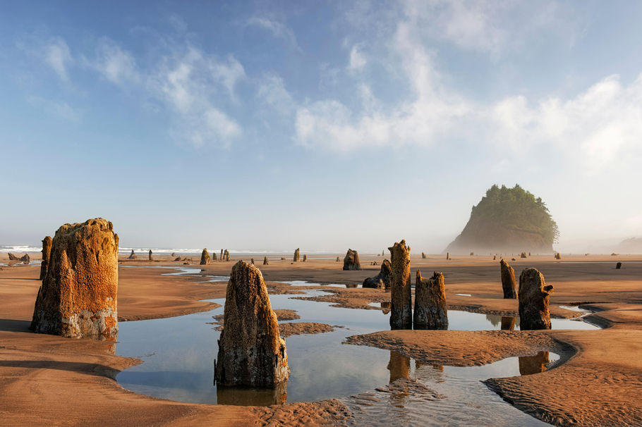 photo of neskowin forest