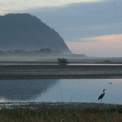 Image of heron in Tillamook Estuary