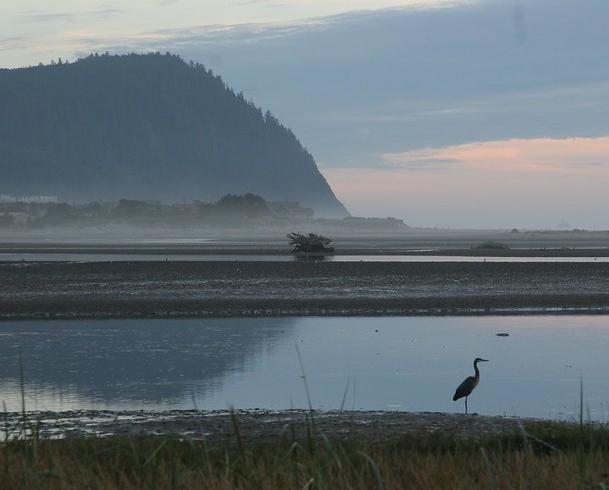 Image of heron in Tillamook Estuary