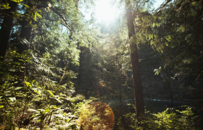 Forest alongside the Clackamas River