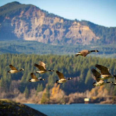 Photo of birds flying through the Columbia Gorge
