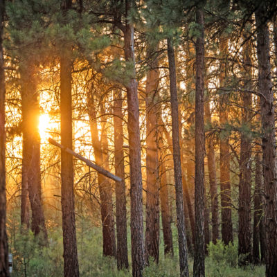 Sun shining through wooded forest