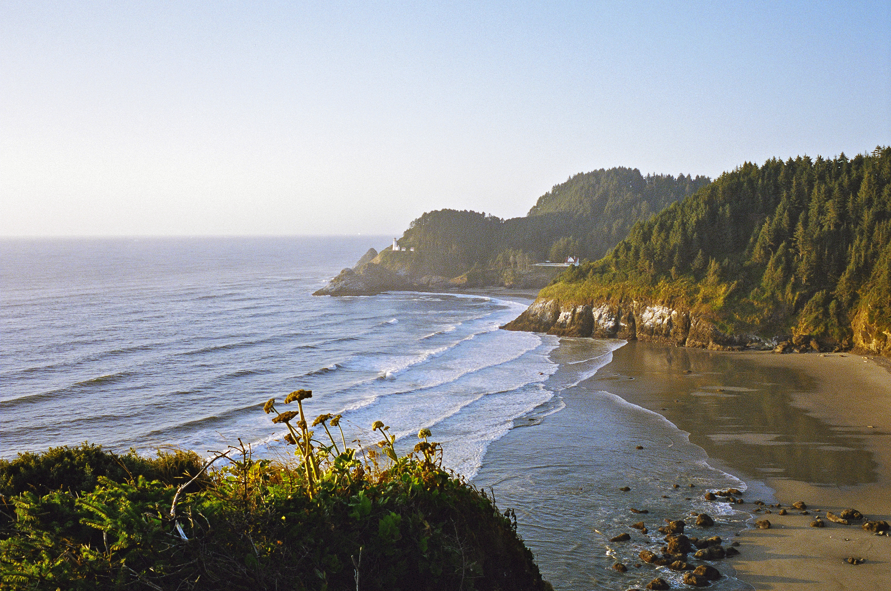 Oregon Coast , view tree covered shore and ocean waves.